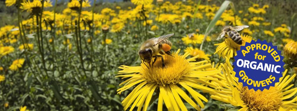 banner-bee-4