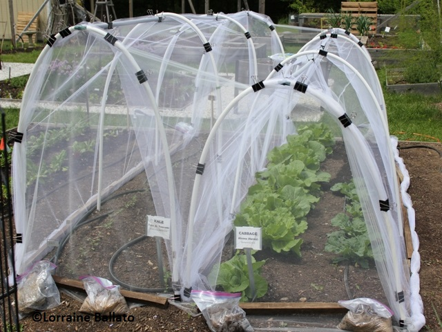 InsectNetting