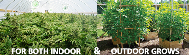 Best soil for both indoor and outdoor cannabis grows