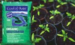 Seed Starting 101 how to start seedlings indoors