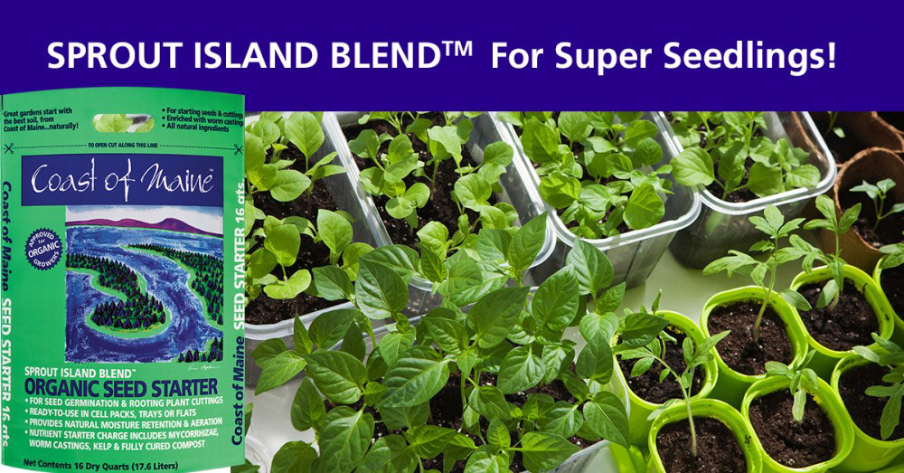 Sprout Island Blend - Social Media Content - Coast of Maine