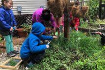 Brixham-Montessori-Friends-School-pics3